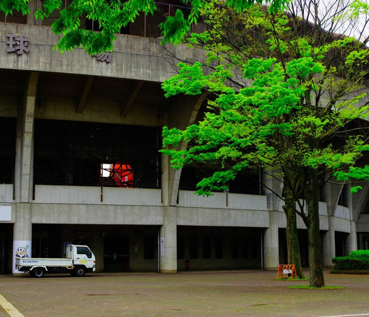 ヤマブキとカンザンと平塚市総合公園