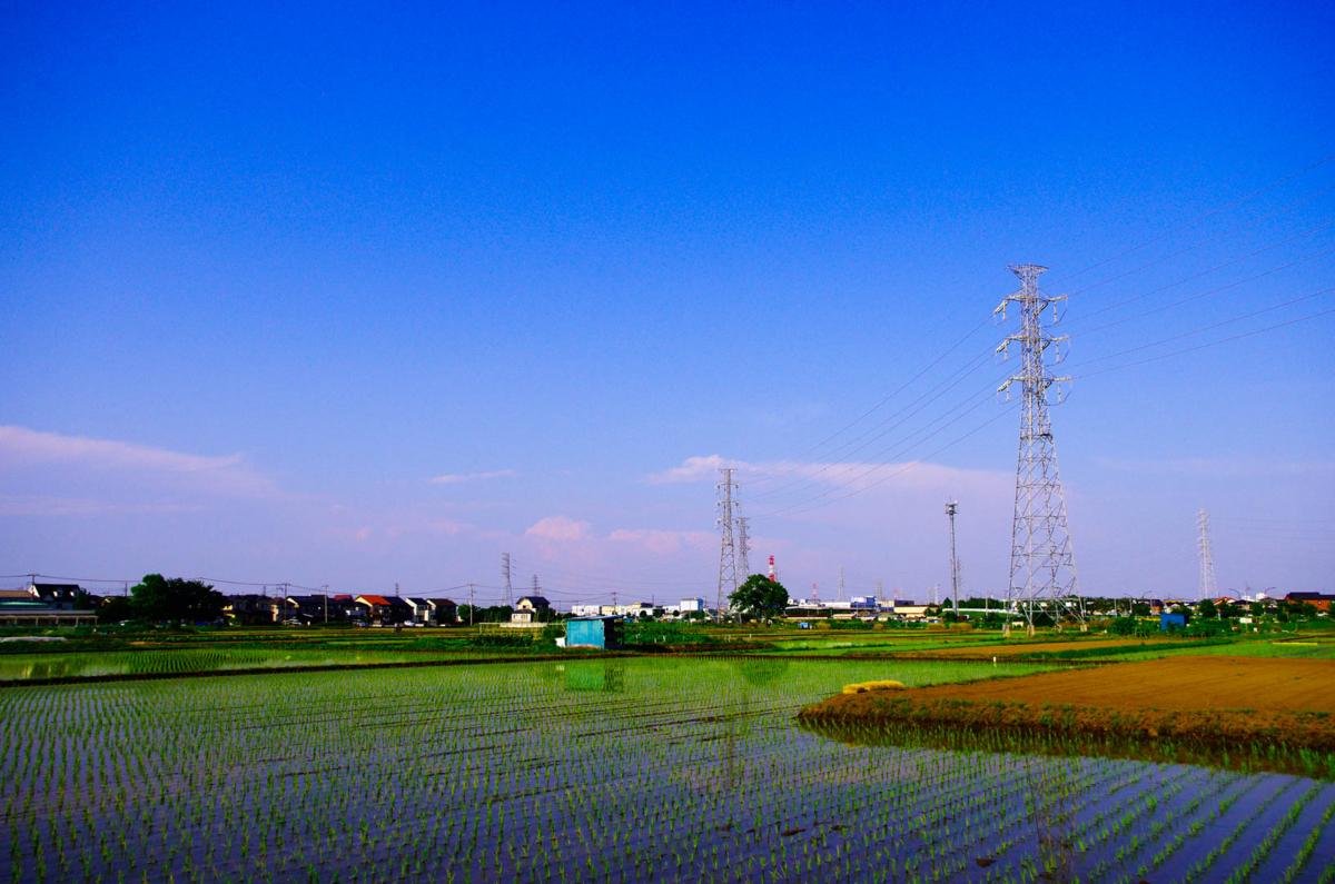 平塚市(豊田)らへんの田園風景(水田を渡る風が気持ちいいよん)
