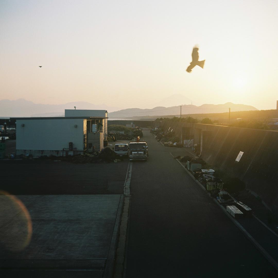 風を撮りました( ミノルタフレックス