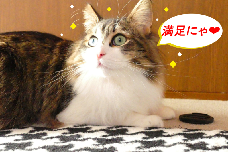f:id:mint_shian:20170125153353j:plain