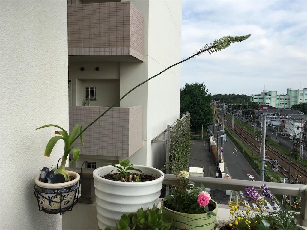 f:id:mintsuchi:20170527155425j:image