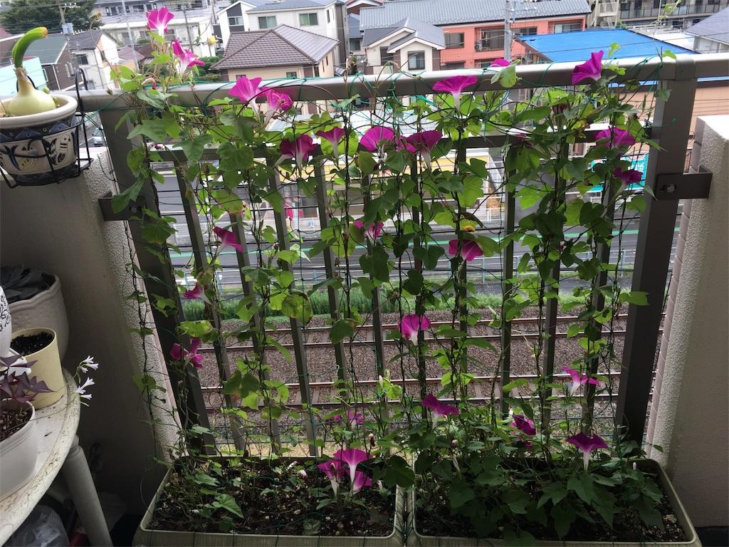 f:id:mintsuchi:20170916094425j:image