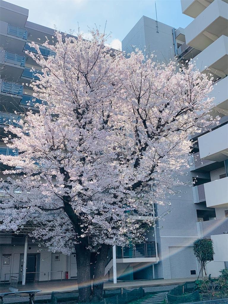 f:id:mintsuchi:20210329103509j:image
