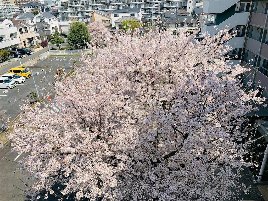 f:id:mintsuchi:20210329103520j:image