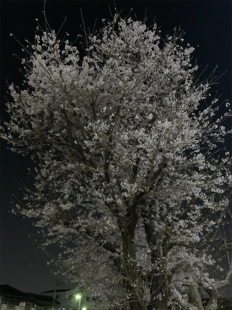 f:id:mintsuchi:20210329103619j:image