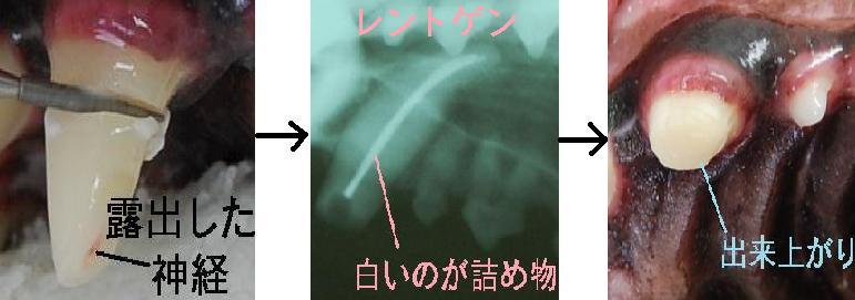 f:id:minvet2007:20121103191221j:image