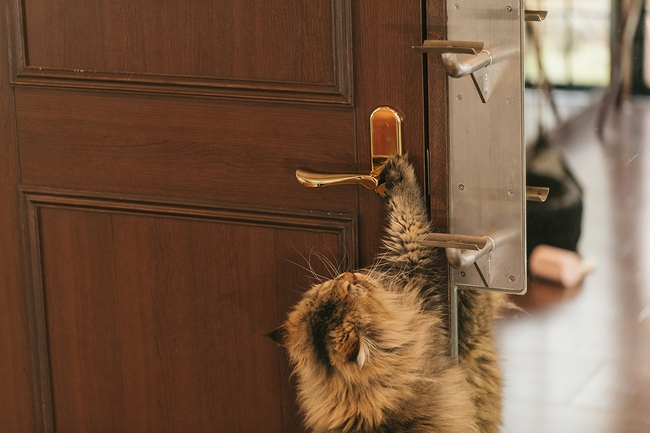 扉を開けてくれる猫