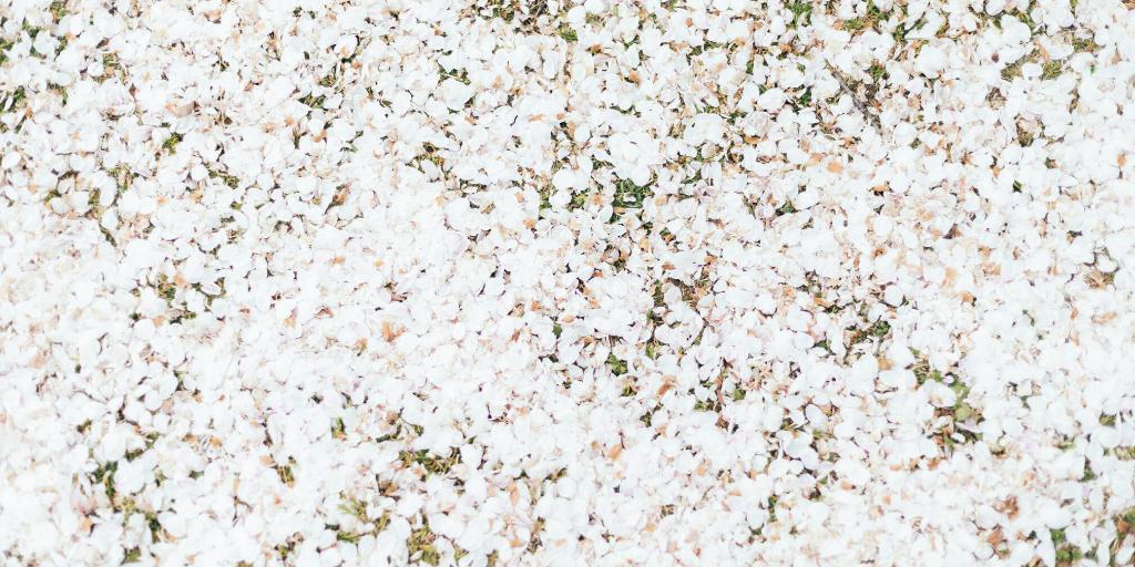 桜を見る会でギャーギャー言ってる奴は品格がない。日本人ではないのだろうか?