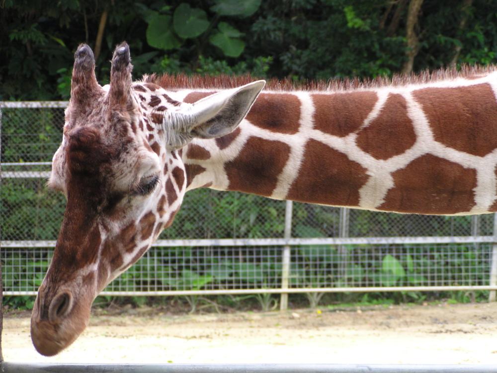 f:id:mion-zoo:20130824071701j:plain