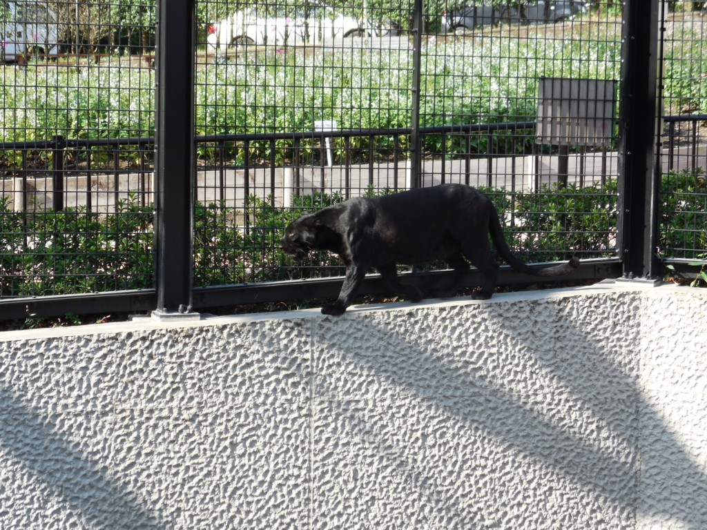 f:id:mion-zoo:20151226134811j:plain
