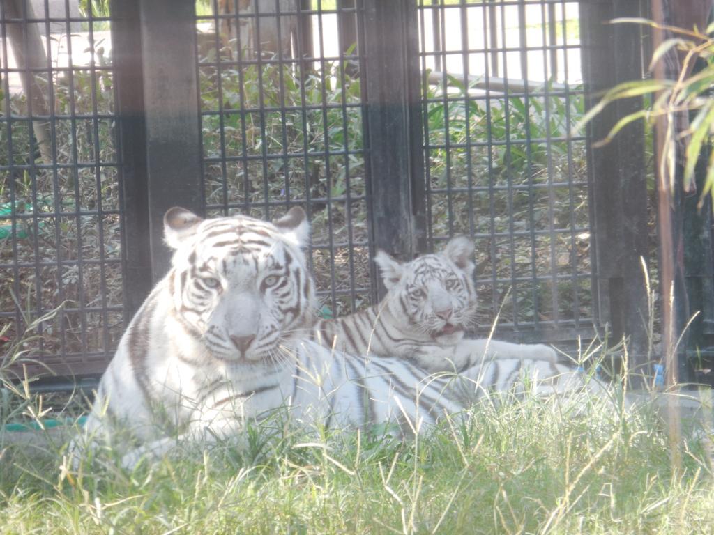 f:id:mion-zoo:20151226135933j:plain