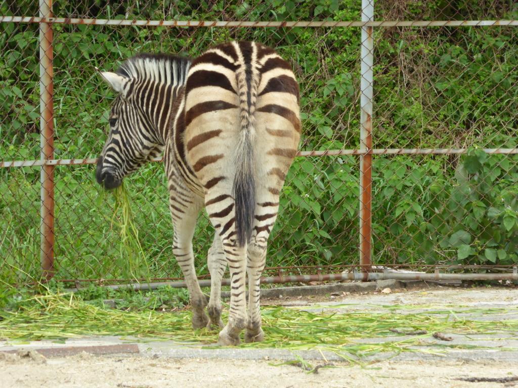 f:id:mion-zoo:20160705212643j:plain