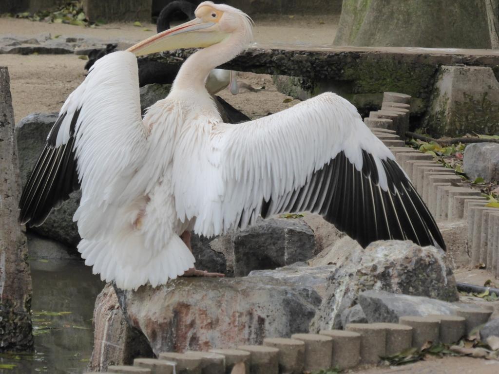 f:id:mion-zoo:20160705212936j:plain
