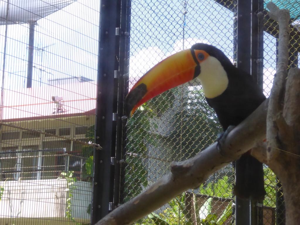 f:id:mion-zoo:20161003145052j:plain
