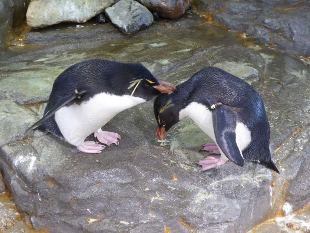 f:id:mion-zoo:20170401090647j:plain