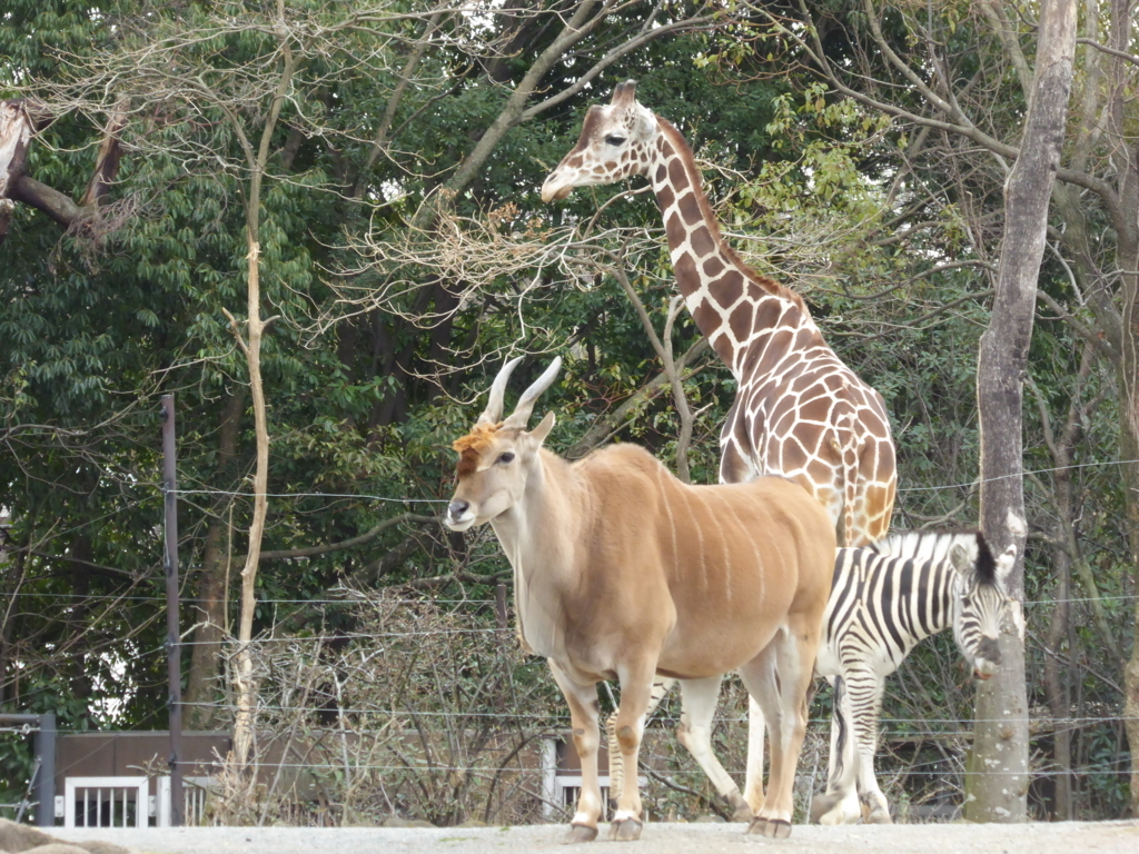 f:id:mion-zoo:20170619180744j:plain