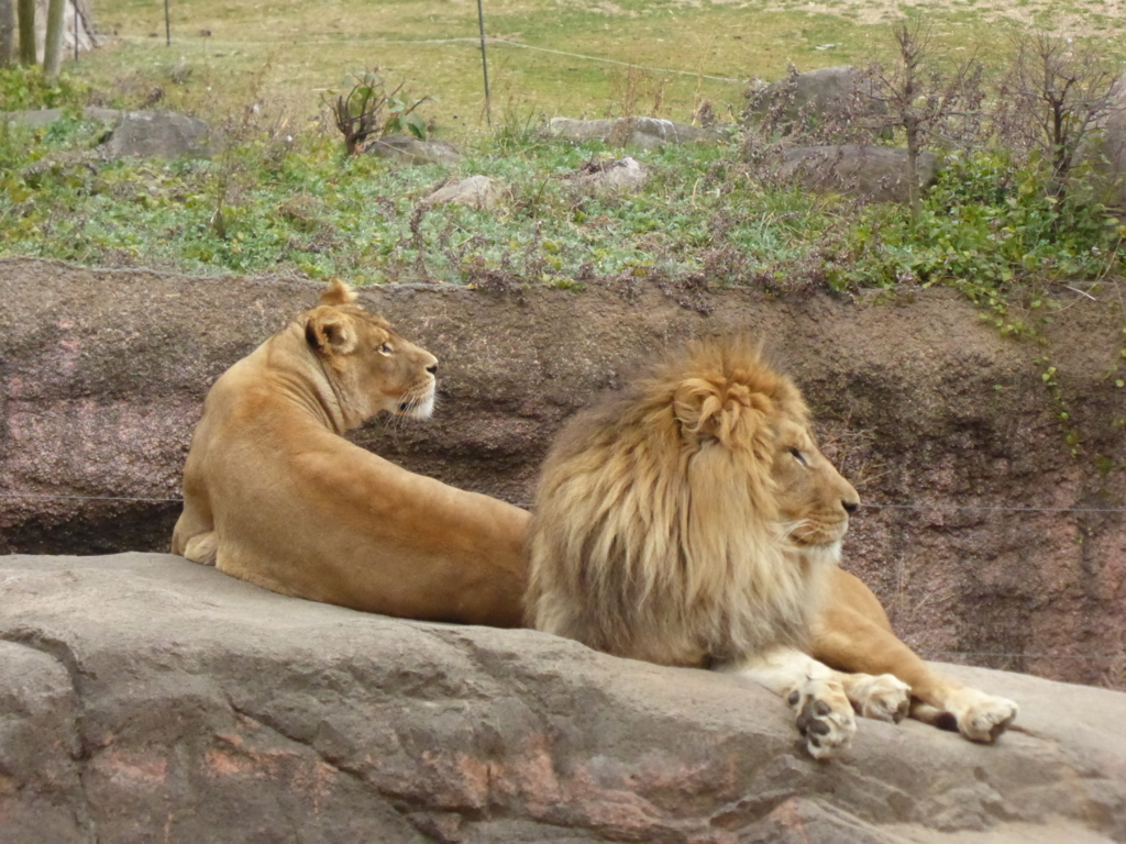 f:id:mion-zoo:20170619181923j:plain