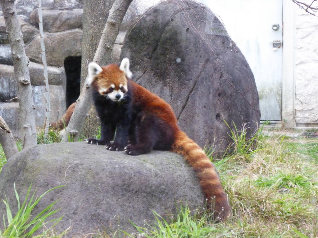 f:id:mion-zoo:20170619185056j:plain