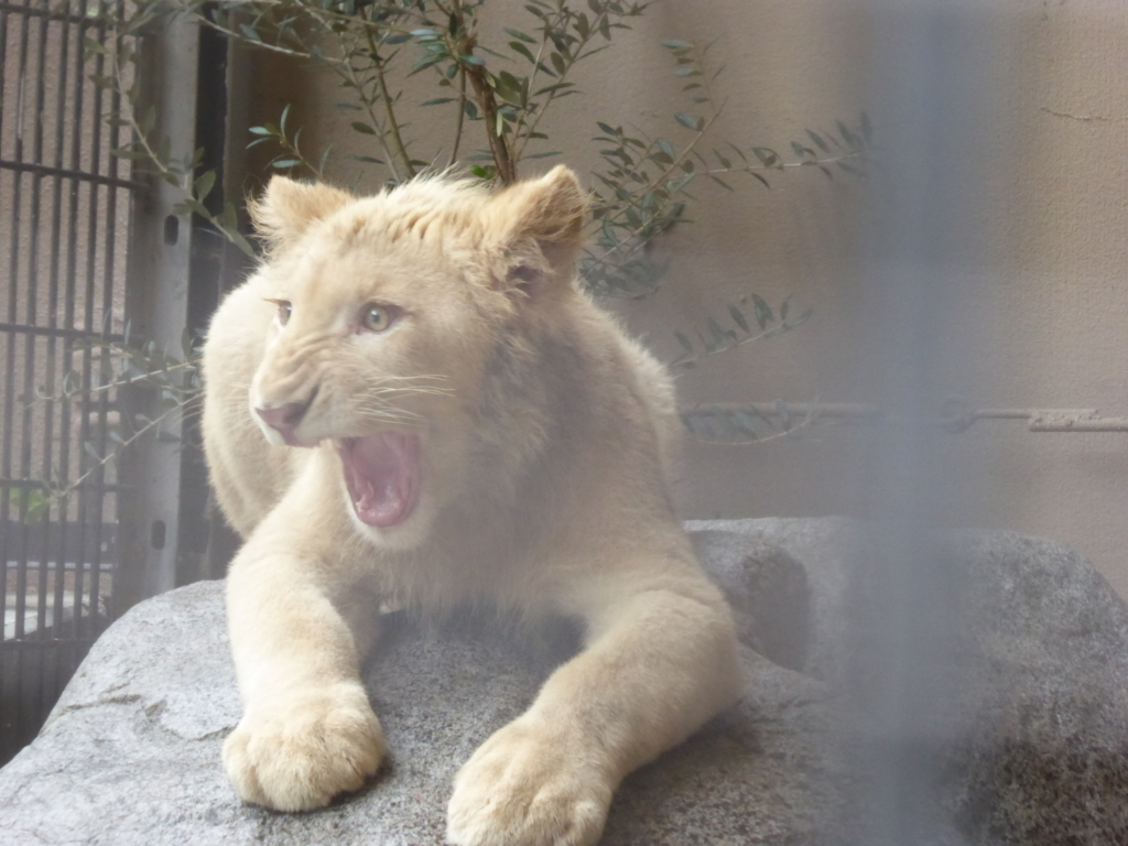 f:id:mion-zoo:20171014231708j:plain