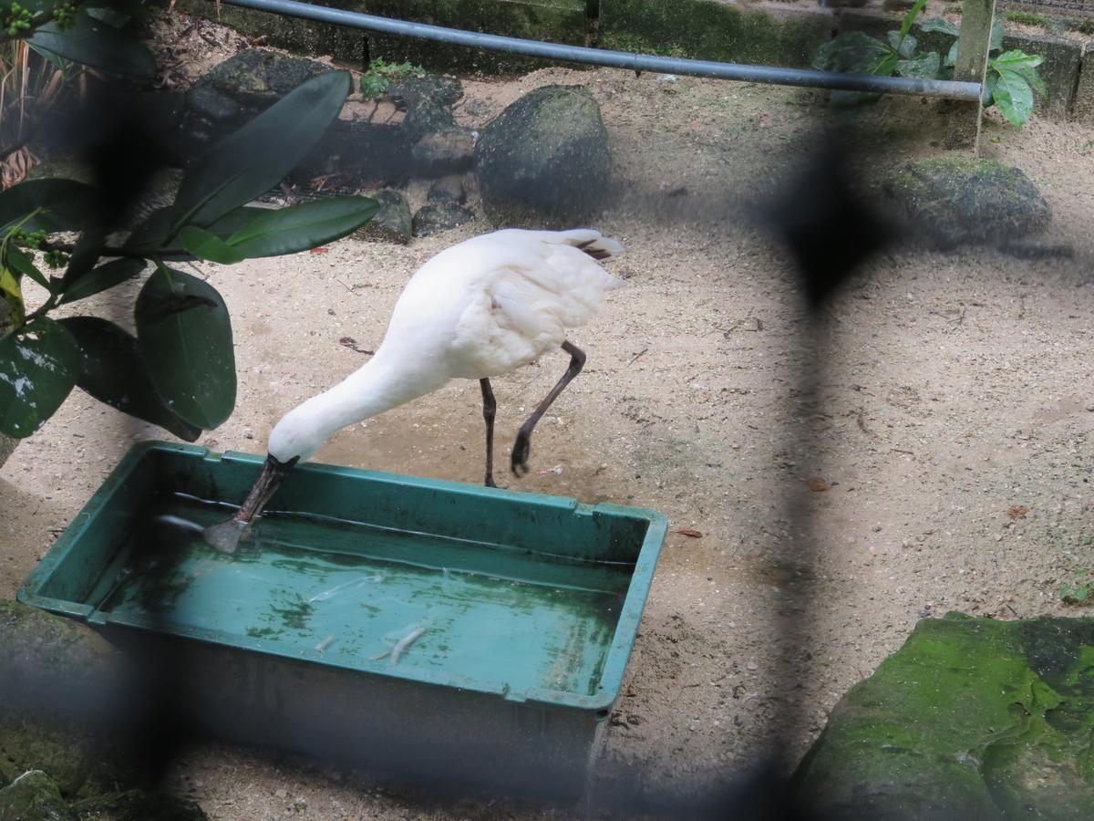 f:id:mion-zoo:20190929100341j:plain
