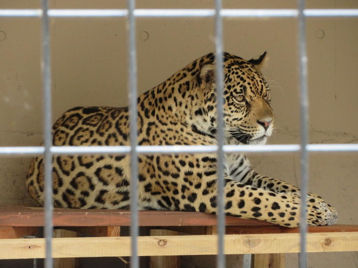 f:id:mion-zoo:20190929101254j:plain