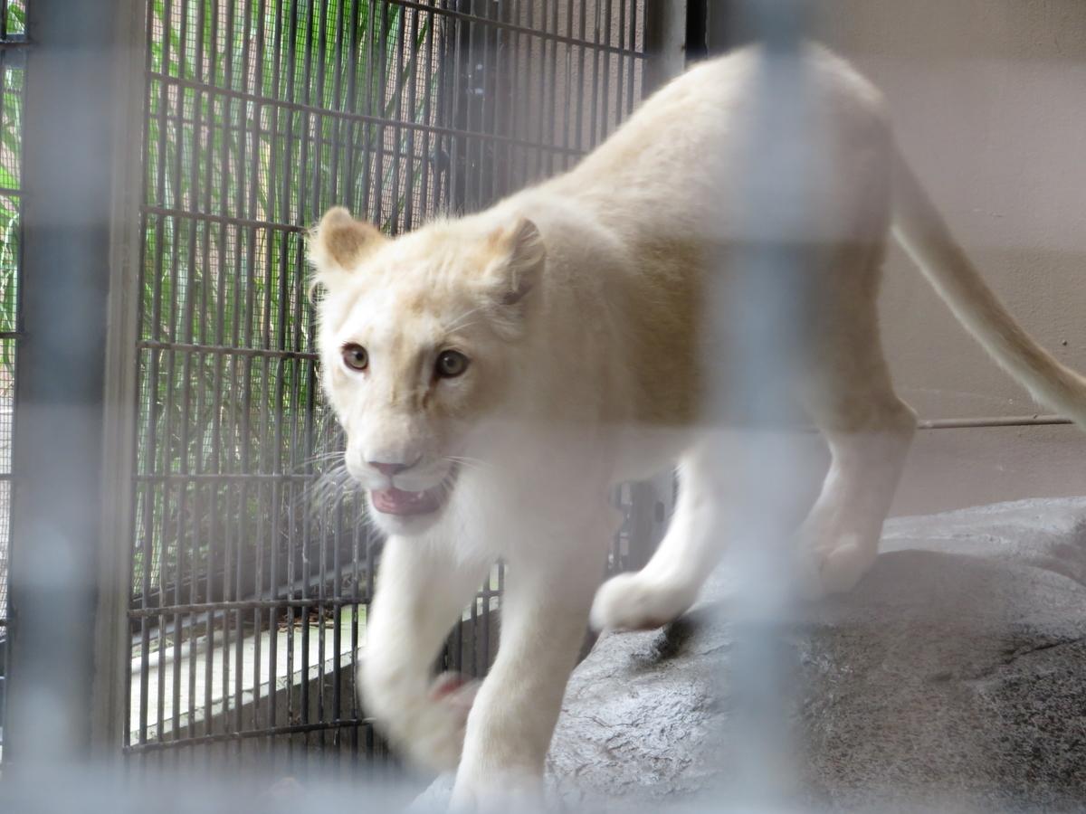 f:id:mion-zoo:20190929101442j:plain