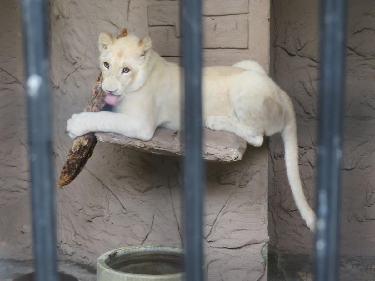 f:id:mion-zoo:20190929101527j:plain