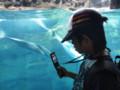 海遊館にきました。イルカ速くて、なかなか写真撮れない~