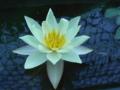 [花][水]
