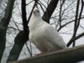 [動物][鳥]
