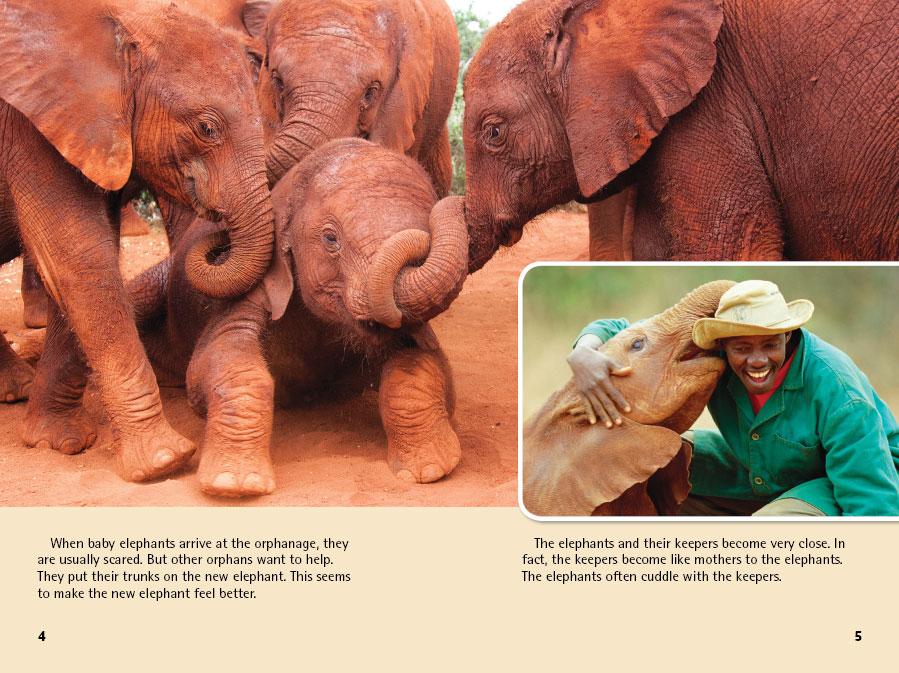 Caring for Elephant Orphans(親を失ったアフリカの小ゾウたち)