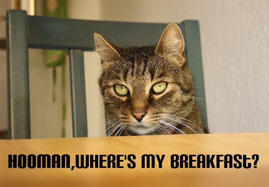 人間、俺様の朝飯はどうなってんだ?