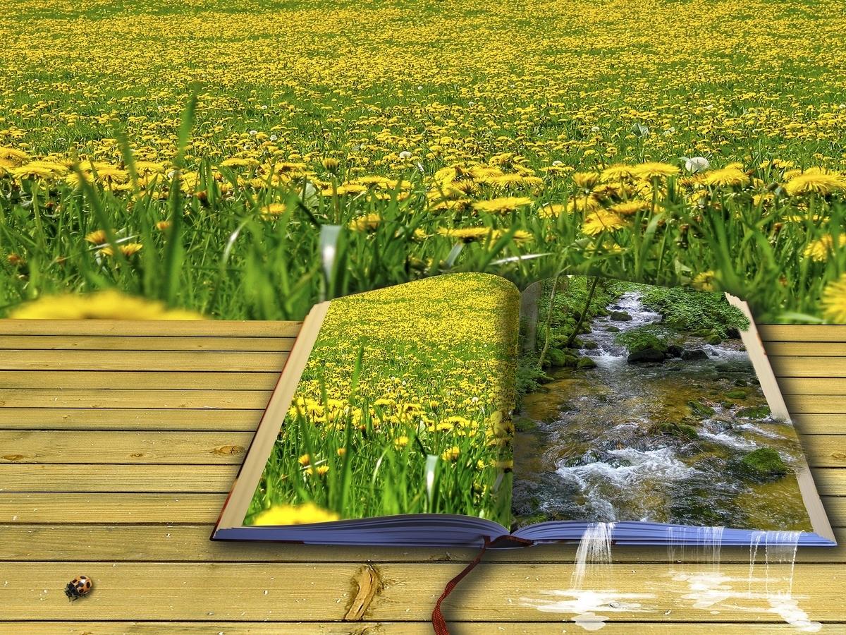 大人のあなたにすすめたい絵がきれいな英語絵本2冊