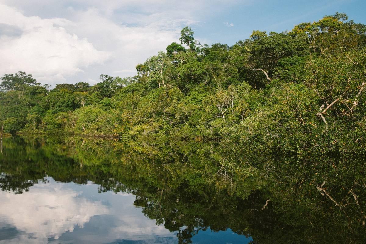 「違法伐採」は英語でなんて言う?ブラジルのアマゾン森林消失面積が前年より9.5%増