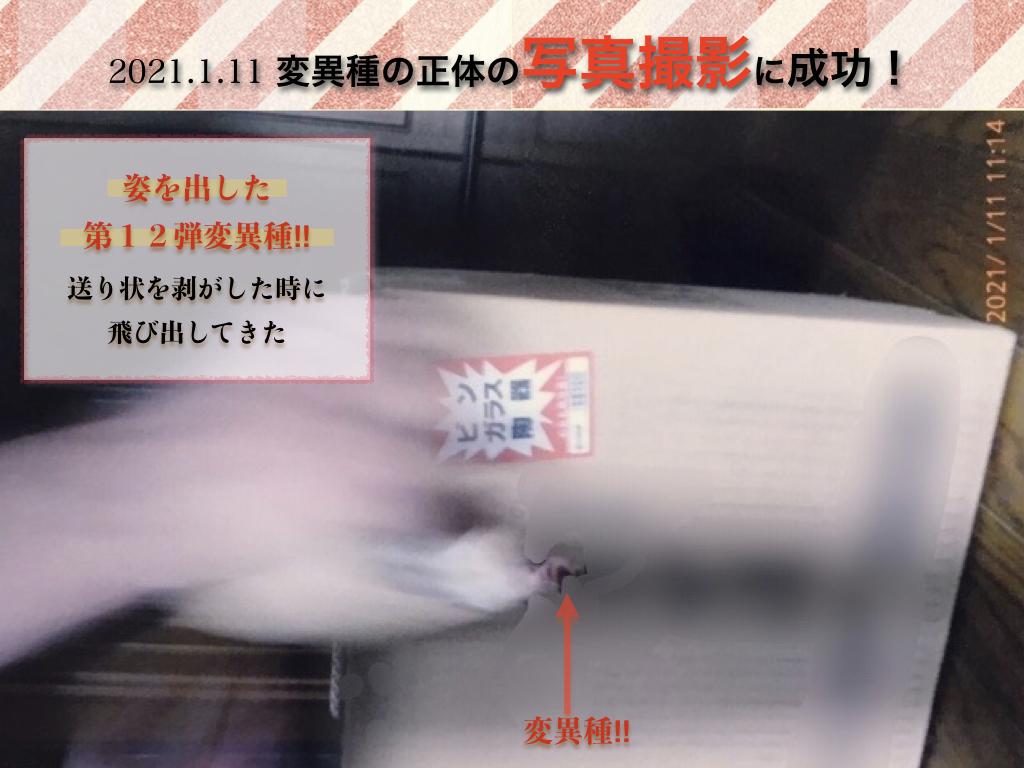 f:id:mirai-hadou:20210113000631j:plain