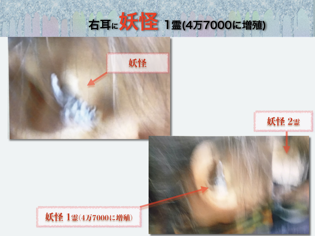 f:id:mirai-hadou:20210115193308j:plain