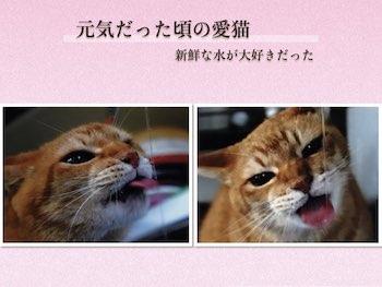 f:id:mirai-hadou:20210522180414j:plain