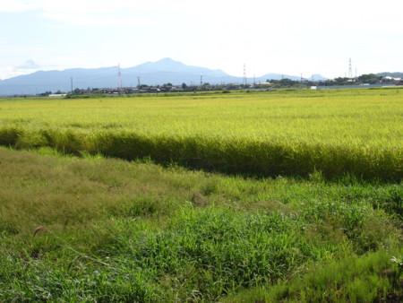 f:id:mirainodaifugoo:20080831150653j:image