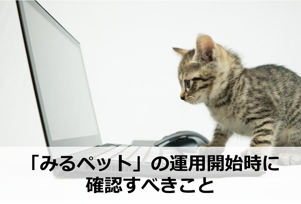パソコンに向かっているネコ