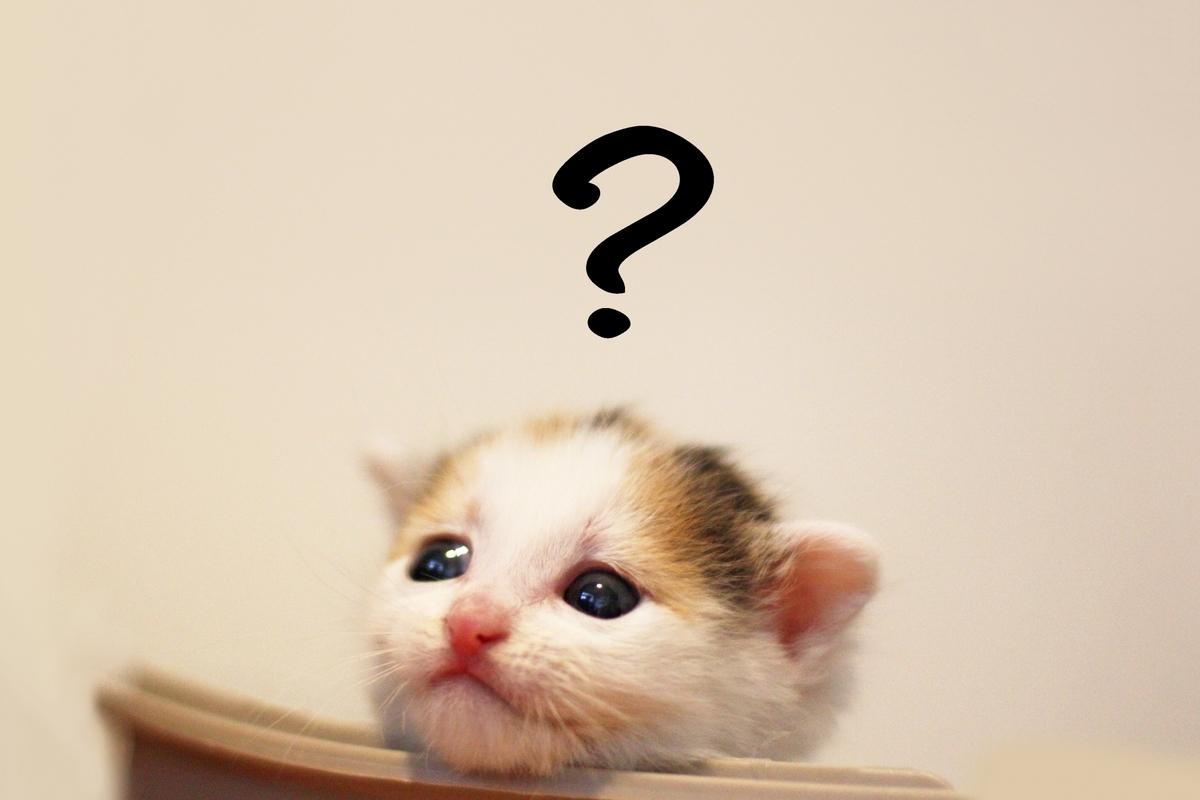 子猫とはてなのマーク