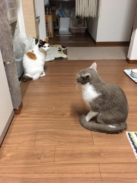 f:id:misaki-ah03:20200703192943j:plain