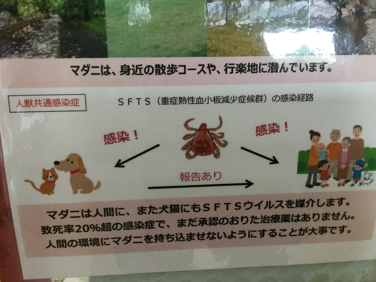 f:id:misaki-ah03:20200717191135j:plain