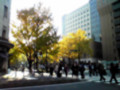 横浜 銀杏