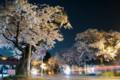 宇都宮大学工学部前道路の桜