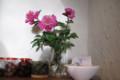 ラジュルネの花