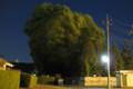 風に踊る樹