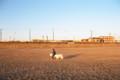 犬の散歩の時間