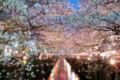 中目黒の桜