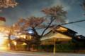 宇都宮大学工学部前通りの桜
