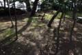 江島神社の庭木 9時半